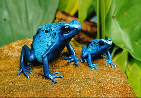 http://img44.xooimage.com/files/2/e/b/a96745_poison-dart-frog2-10cb104.jpg