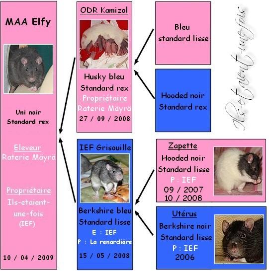MAA Elfy x Wonka (54, 55, 57, 88 + Covoit) G-n-alogie-maa-elfy-12f0f84