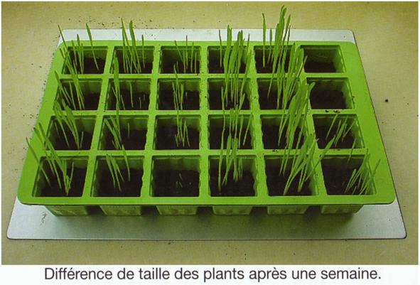 Expérience non certifiée. - Page 4 Bac-germination-140a165