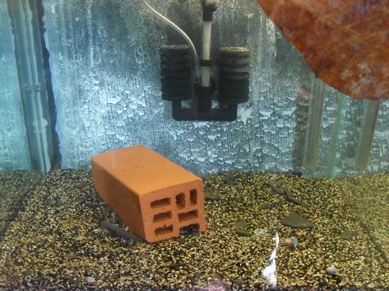 ma shrimproom et fishroom Sdc12038-1ce7e7b